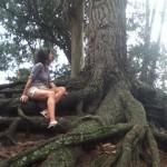 arbol-raices-flavia